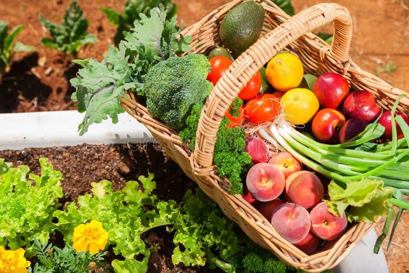 Organisches Obst und Gemüse lizenzfreie stockfotografie