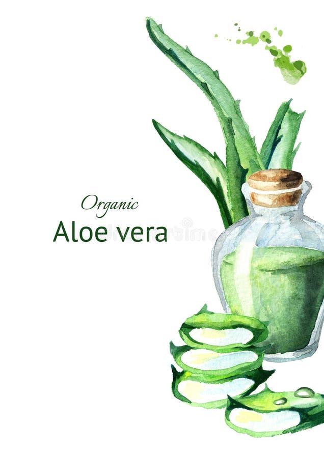 Organisk aloevera mall vattenfärg vektor illustrationer