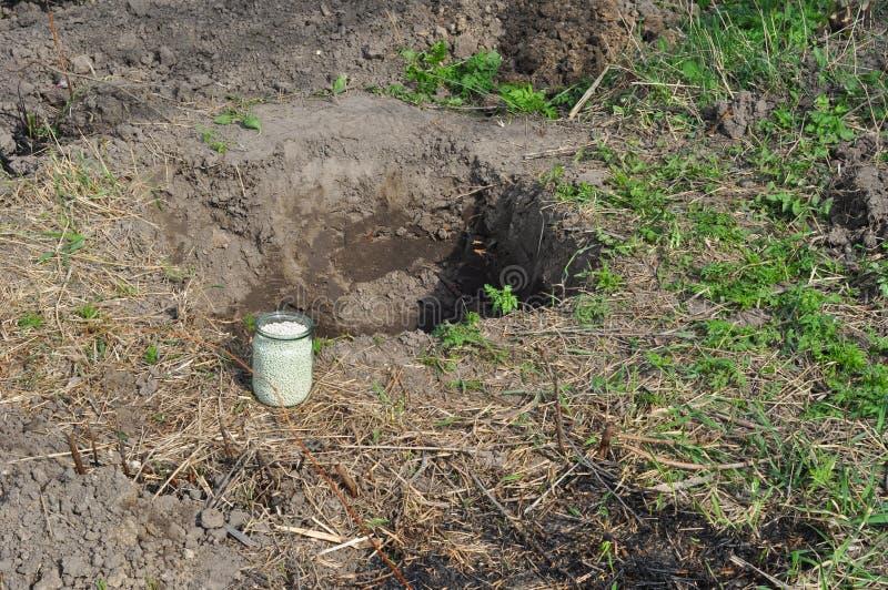 Organisk befruktning för träd med kompost, i att gräva hålet Gödningsmedel för ammoniumnitrat för att plantera för fruktträd arkivbild