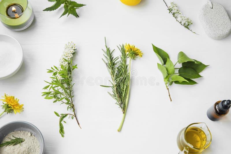 Organisk brunnsort naturliga växt- skincareingredienser med örter och royaltyfri bild