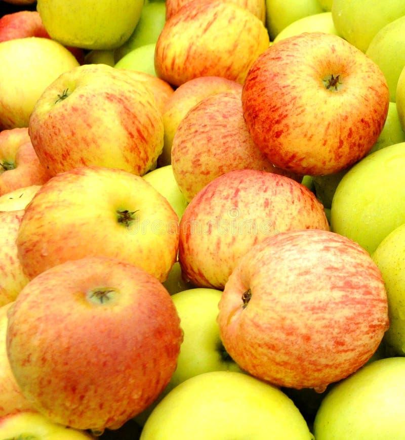 Organisk frukt royaltyfri foto