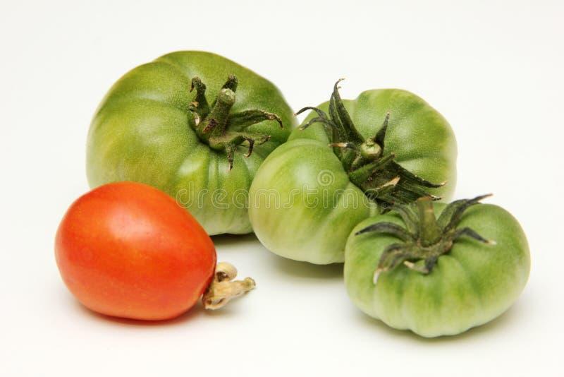 Organisk, grön och röd tomat på vit bakgrund royaltyfria bilder