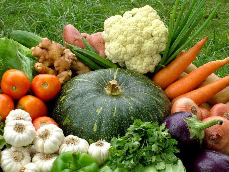 organisk grönsak för korg royaltyfria foton
