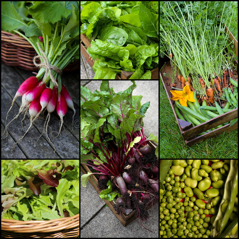 Organisk grönsakuppsättningcollage fotografering för bildbyråer