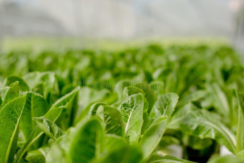 Organisk hydroponic lantgård arkivbild