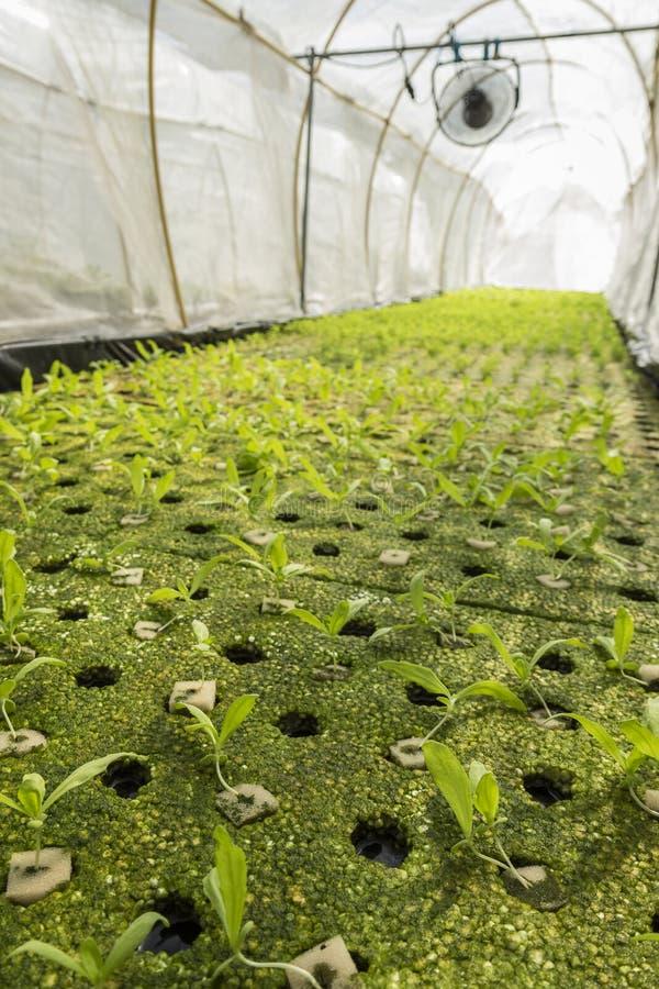 Organisk kolonilantgård arkivfoton