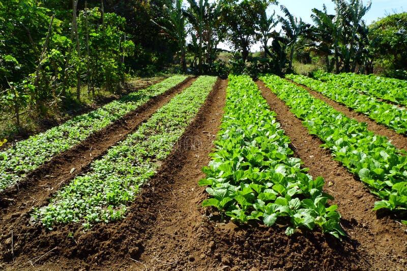 organisk lantgård arkivfoto