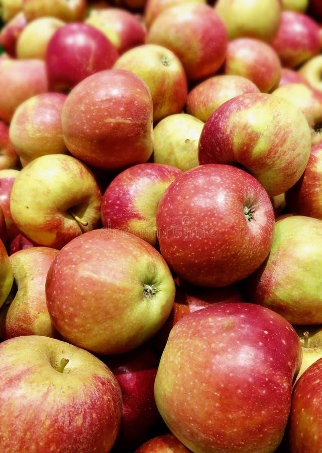 Organisk marknad för äpplen arkivfoto