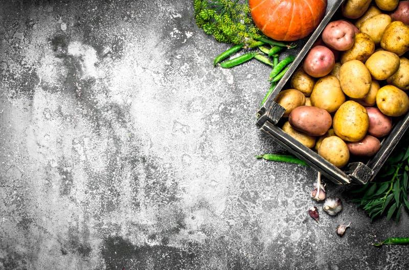 Organisk mat Nya potatisar i en ask och andra grönsaker arkivbilder
