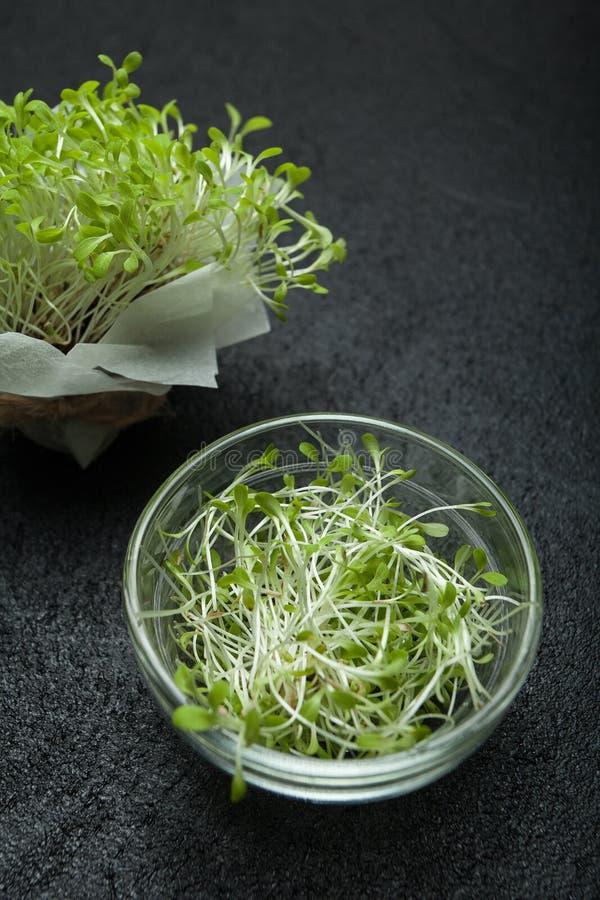 Organisk mikrogräsplan på en svart bakgrund Nya mikro-gräsplan groddar för sund vegetarisk kokkonst Begreppet av hälsa, bantar royaltyfria foton