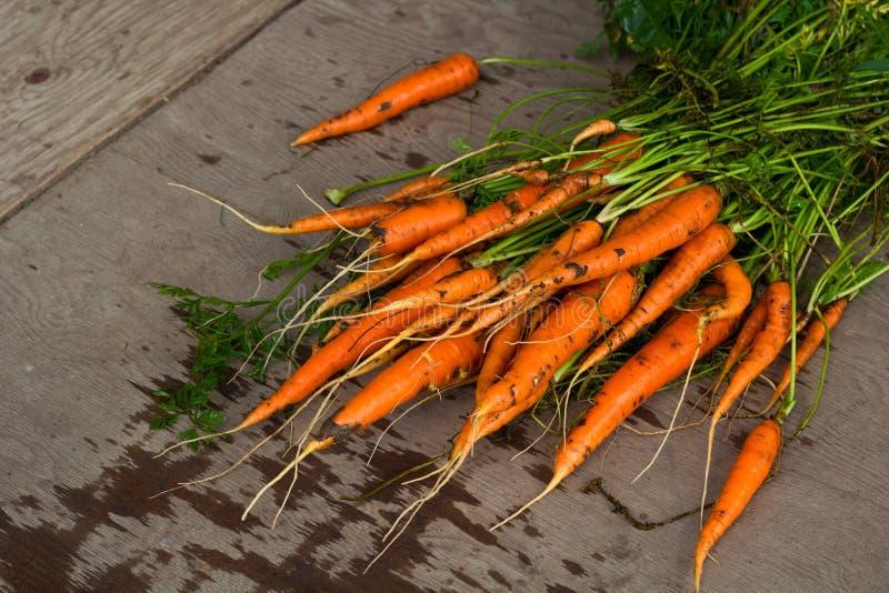 Organisk morot för ny lantgård arkivfoton