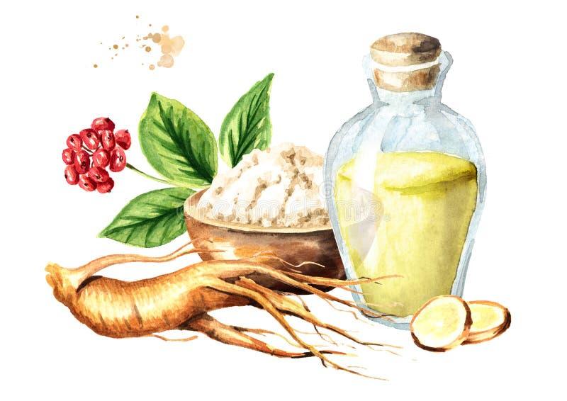 Organisk ny ginsengsammansättning Rota, sprick ut, blomma, pudra, tinktur Dragen illustration för vattenfärg som hand isoleras på vektor illustrationer