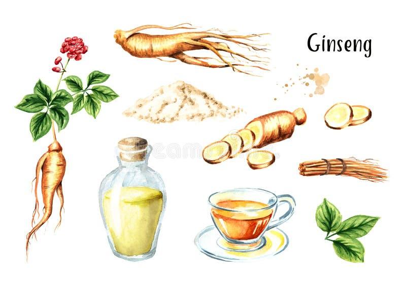 Organisk ny ginsenguppsättning Rota, sprick ut, blomma, te, tinktur Dragen illustration för vattenfärg som hand isoleras på vit b royaltyfri illustrationer