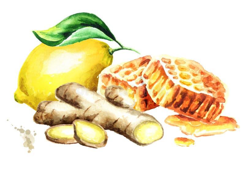 Organisk ny ingefära-, citron- och honungsammansättning Dragen illustration för vattenfärg som hand isoleras på vit bakgrund royaltyfri illustrationer
