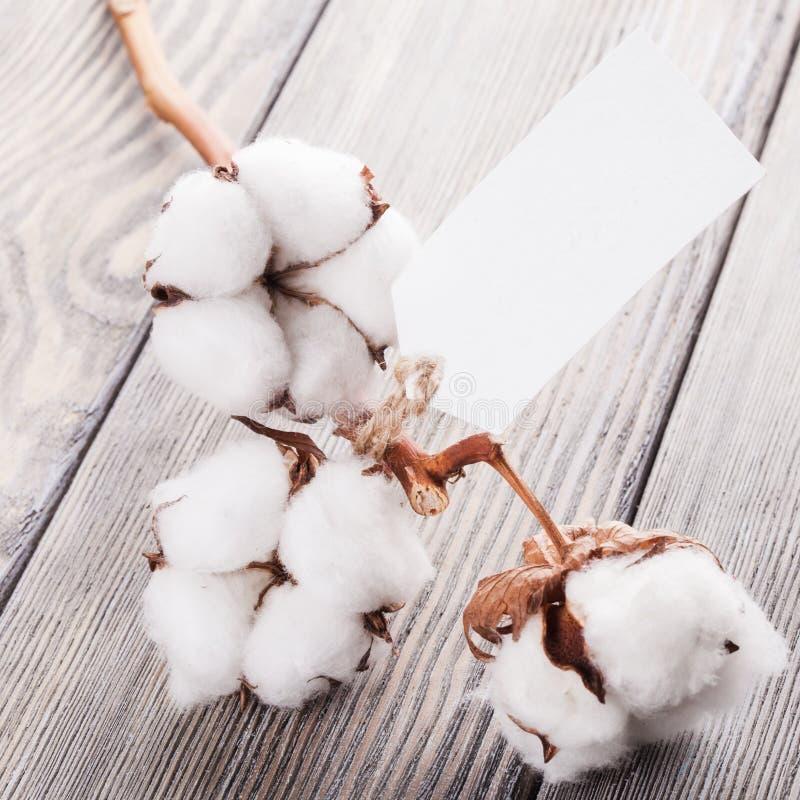 Organisk textil för bomull royaltyfria bilder
