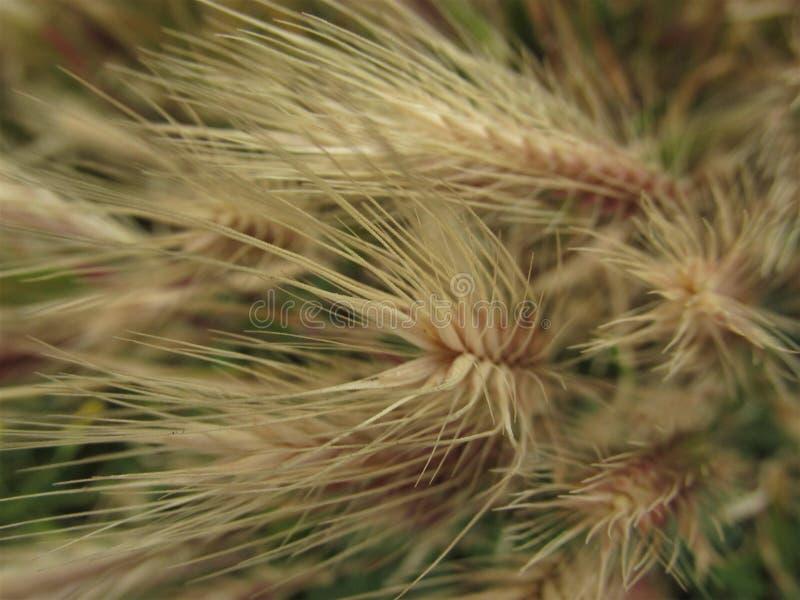 organisk textur mot bakgrund field blåa oklarheter för grön vitt wispy natursky för gräs royaltyfria bilder