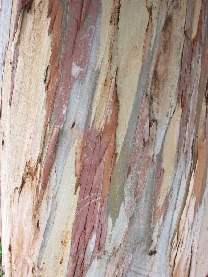 organisk textur Wood bakgrund Abstrakt begrepp woodeen textur arkivbild