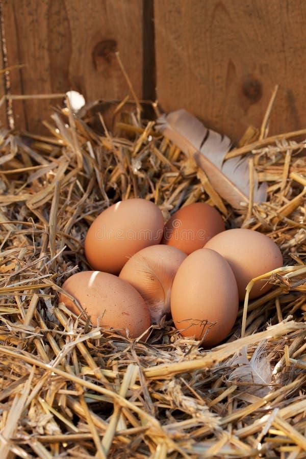 Organiska ägg royaltyfri fotografi