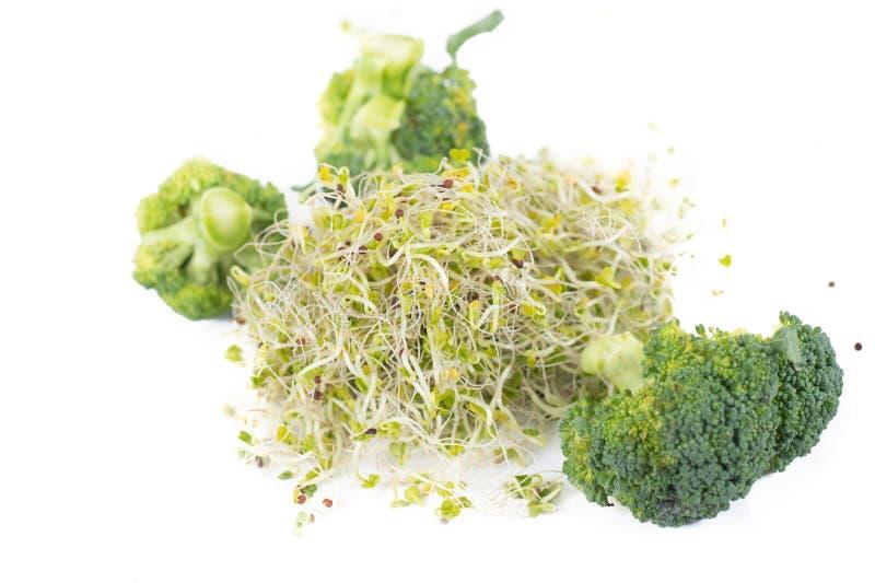 Organiska broccoligroddar och buketter arkivfoton