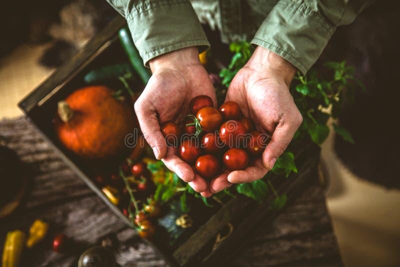 Organiska grönsaker på trä arkivbild