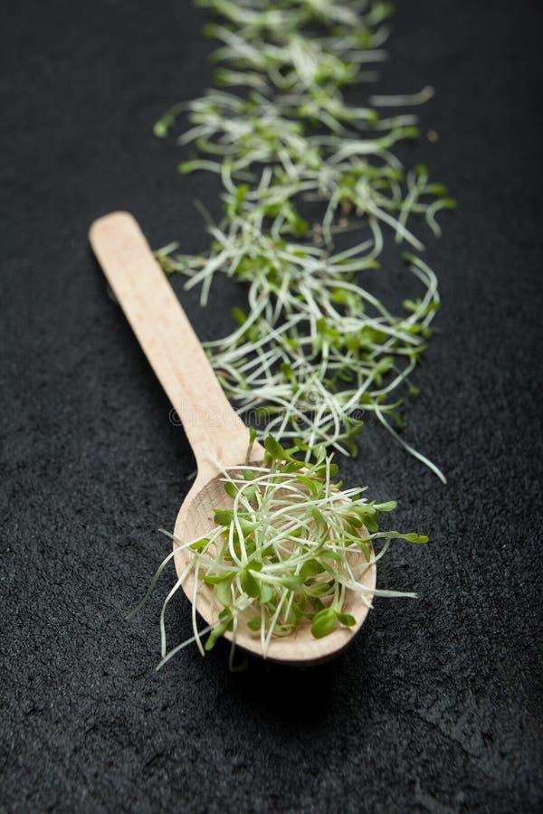 Organiska groddar av mikrogräsplaner i en träsked, vertikalt fotografering för bildbyråer
