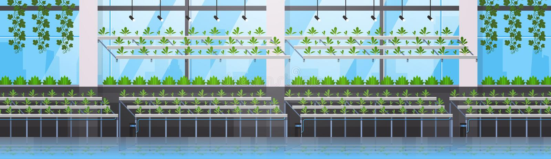 Organiska hydroponic gröna växter ror banret för begreppet för det bruka systemet för det moderna växthuset för odlinglantgården  royaltyfri illustrationer
