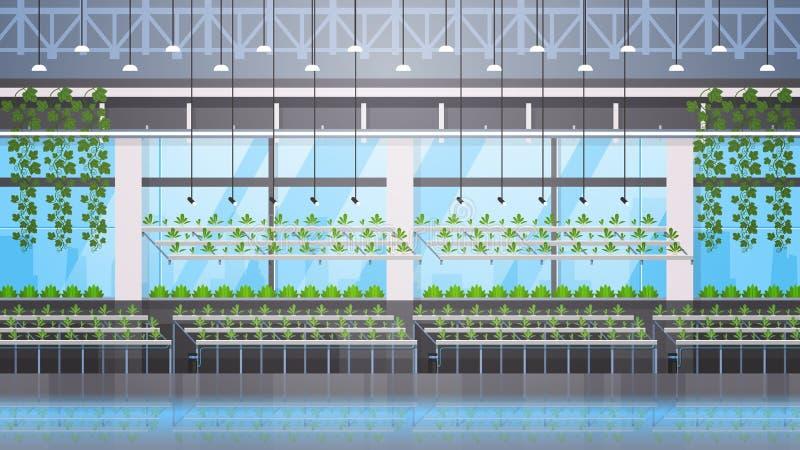 Organiska hydroponic gröna växter ror begreppet för det bruka systemet för det moderna växthuset för odlinglantgården det horison royaltyfri illustrationer