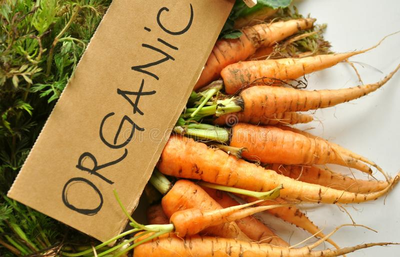 Organiska verkliga veggies: morötter royaltyfri foto