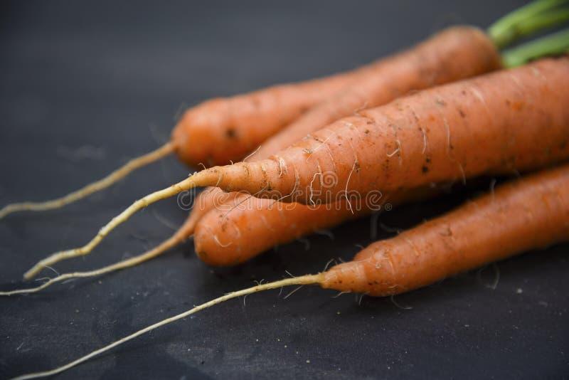 Organiska morötter som skördas nytt från grönsakträdgården på a arkivfoto