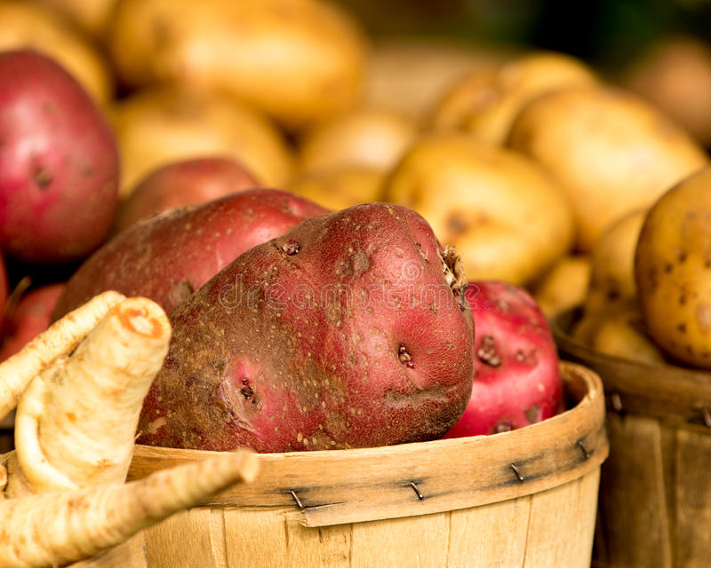 Organiska potatisar i korg royaltyfri bild