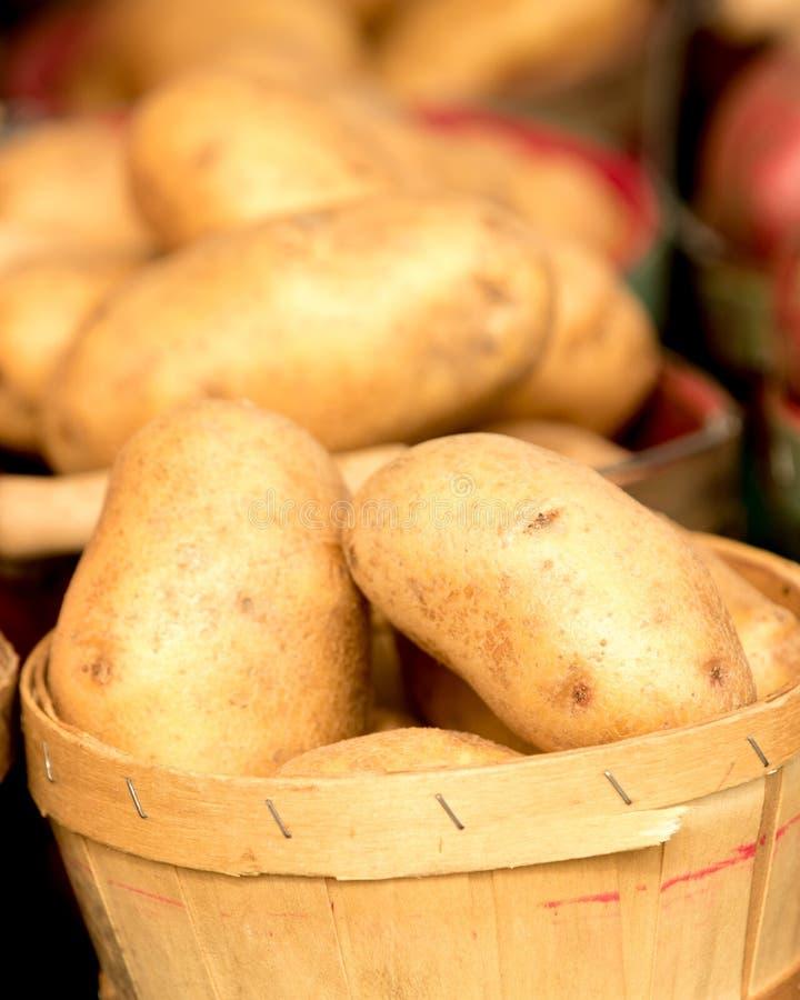 Organiska potatisar i korg royaltyfria bilder