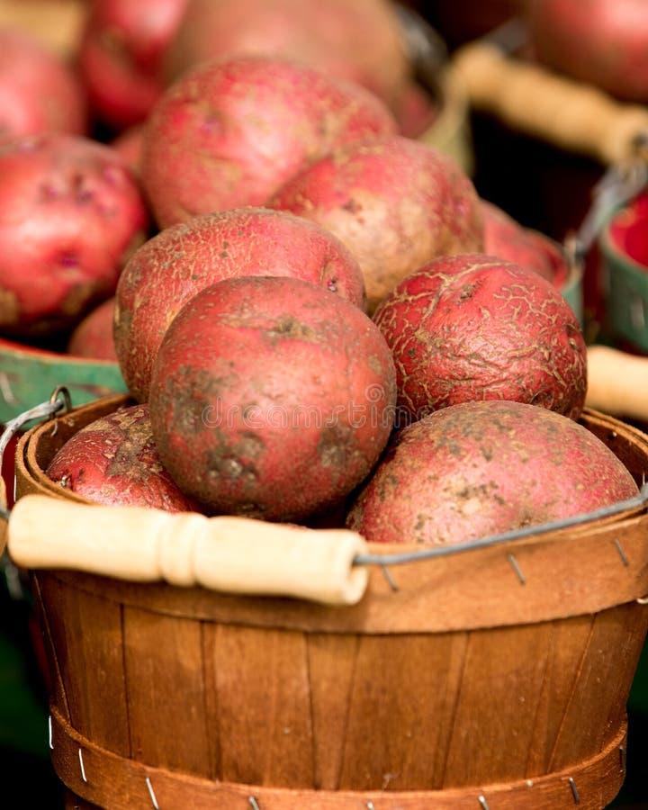 Organiska potatisar i korg royaltyfri foto