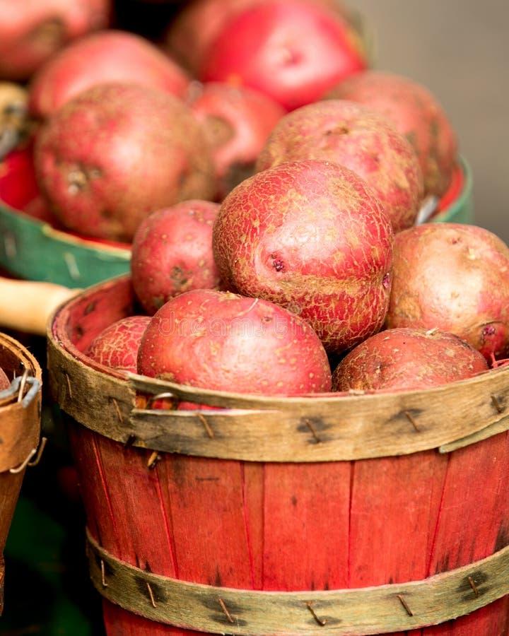 Organiska potatisar i korg arkivbild