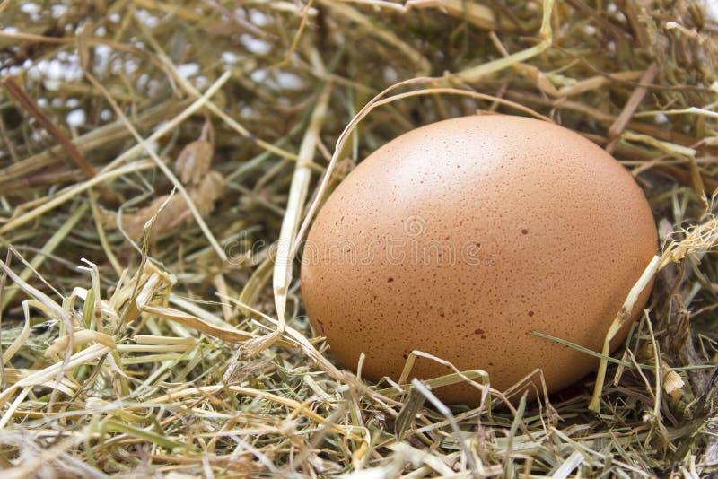 Organiskt brunt ägg i ett rede av hö fotografering för bildbyråer