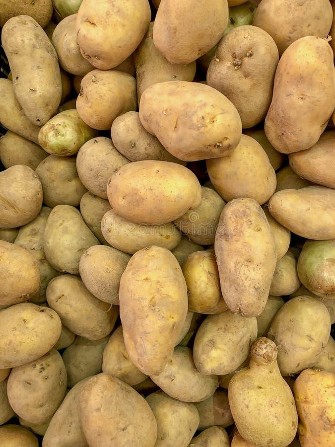 Organiskt för åkerbruk för bakgrund för potatislantgård naturligt brun grupp för mat ny arkivbild