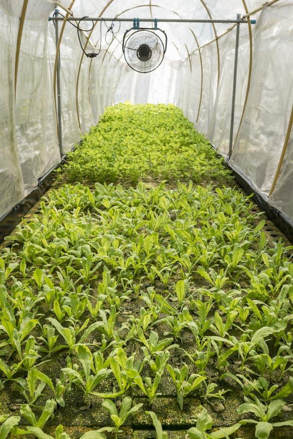 organiskt grönt hus royaltyfria bilder