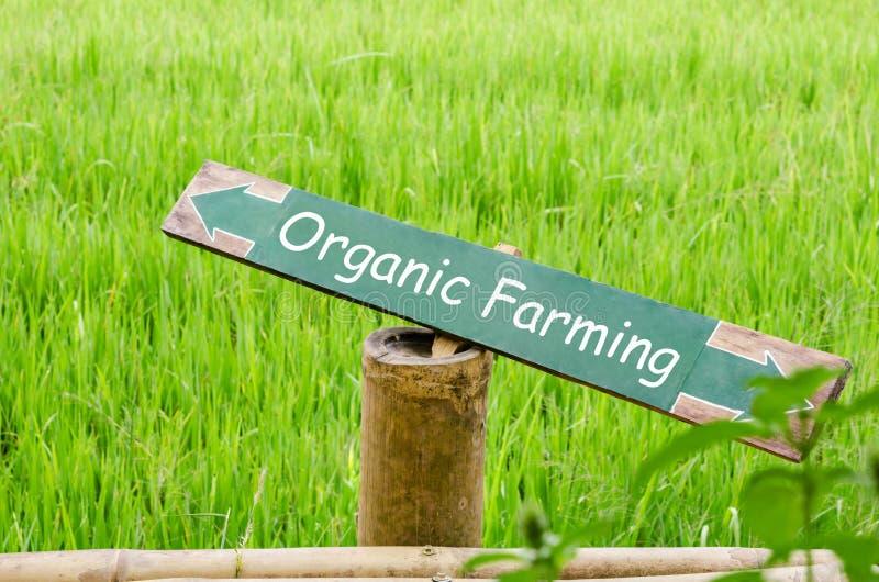 Organiskt lantbruk på den wood etiketten i naturen arkivfoto