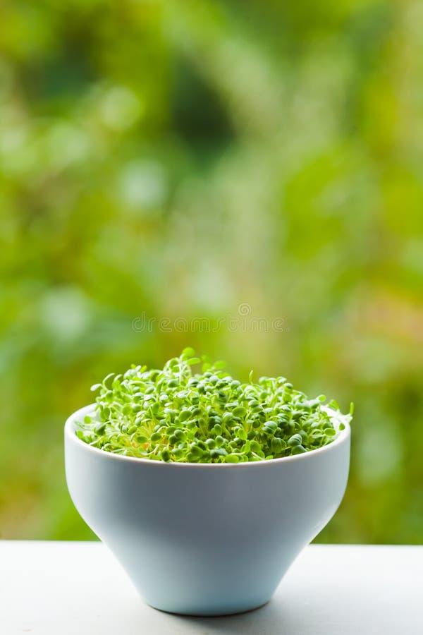 Organiskt mikrogräsplanbegrepp med kopieringstext royaltyfri bild
