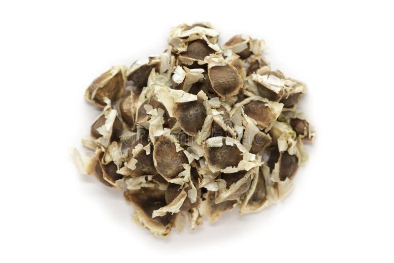 Organiskt Moringa (oleifera Moringa) frö royaltyfri fotografi