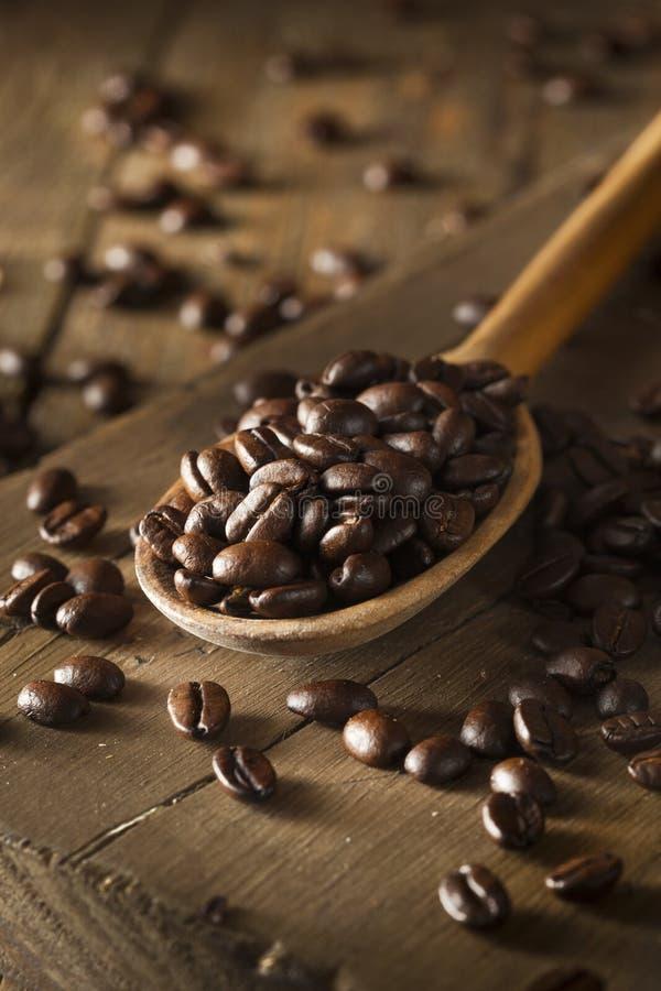 Organiskt torka grillade kaffebönor royaltyfri fotografi
