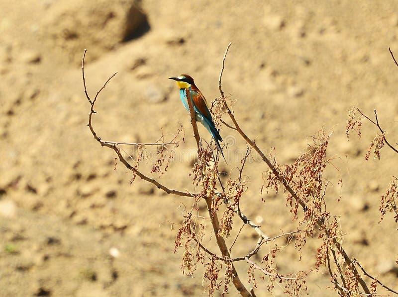 Organism, Bird, Plant, Wildlife stock image
