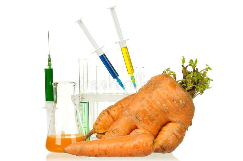 Organismo Genetically modificado fotos de stock