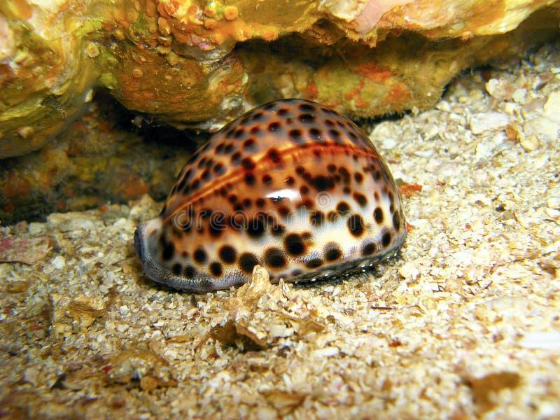 Organismo marinho colorido fotografia de stock royalty free