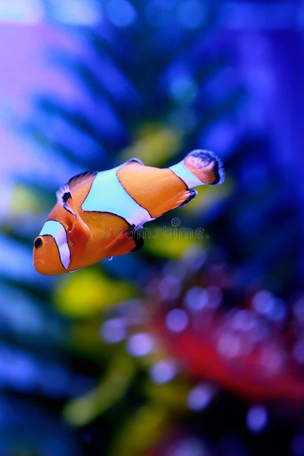 Organismo marino [flysea-02] immagini stock