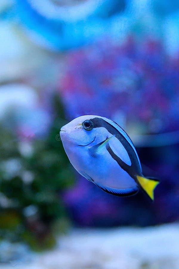 Organismo marino [flysea-01] fotografia stock libera da diritti