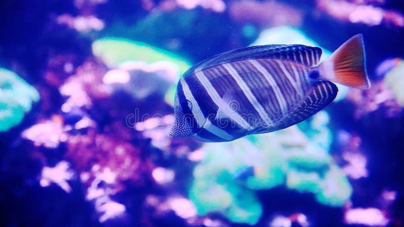 Organismo marino [flysea-09] immagine stock