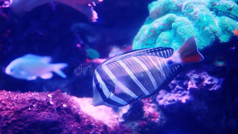 Organismo marino [flysea-10] fotografia stock