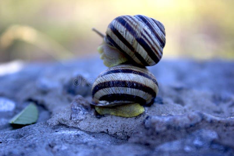 Organismo vivo del molusco foto de archivo libre de regalías
