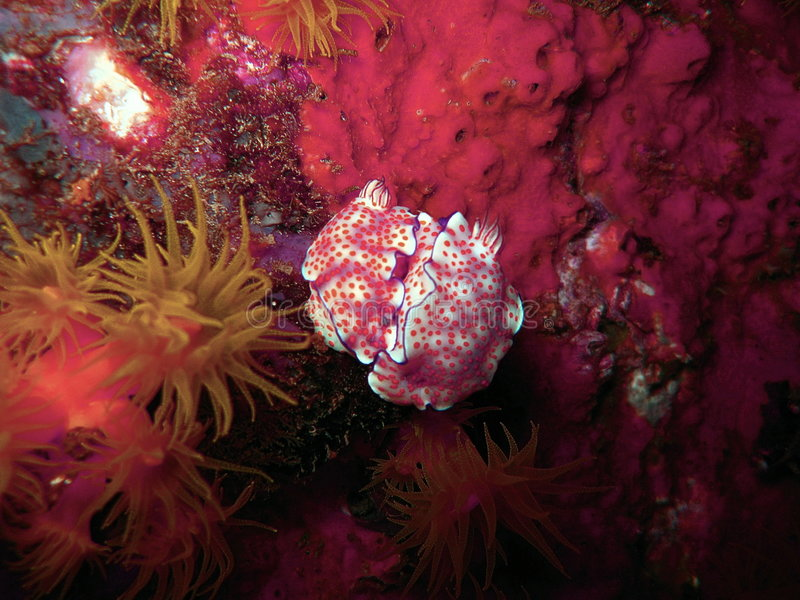 Organismos marinhos coloridos foto de stock royalty free