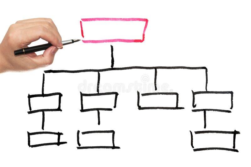 Organization chart. Drawn on the white paper stock photo